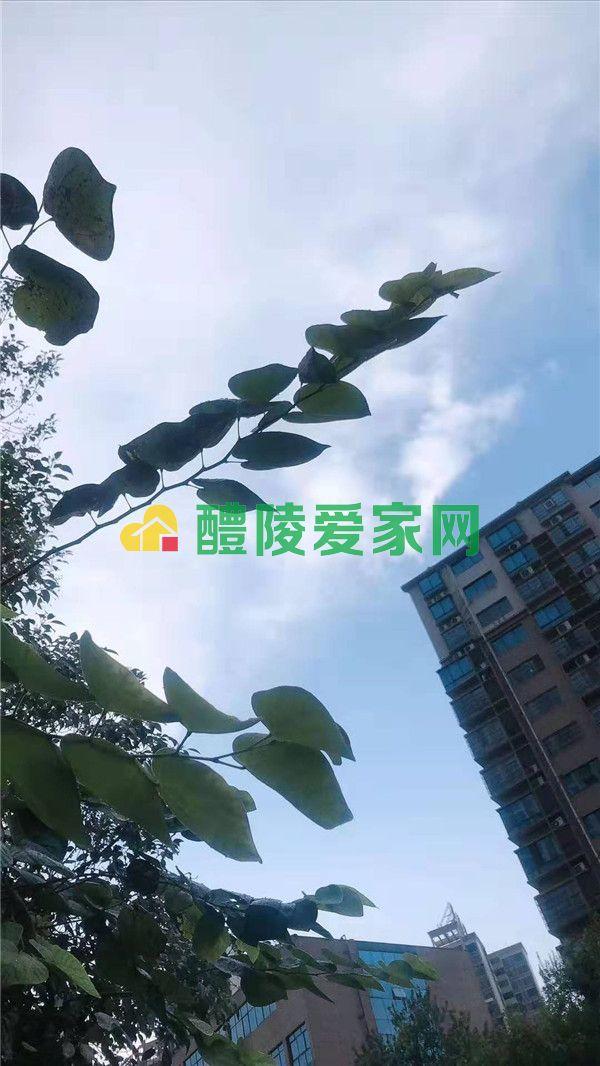 微信图片_201908211759052.jpg